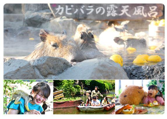 6189-伊豆シャボテン動物公園